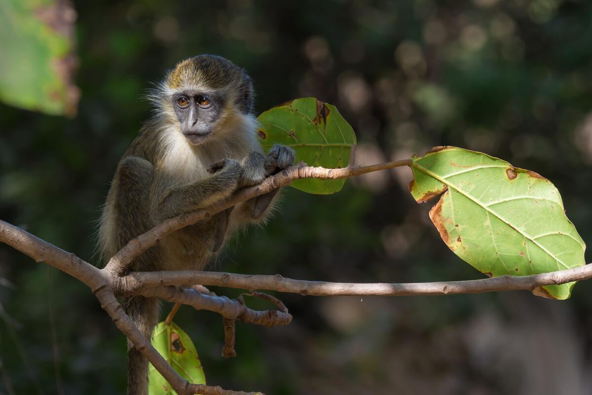 Un mono subido a un árbol.