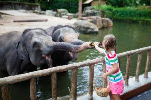 Cuidados necesarios para mantener el bienestar de los elefantes