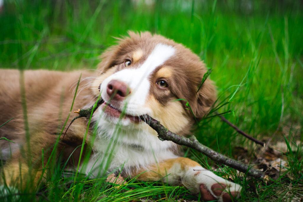 Cuatro nuevas razas de perros