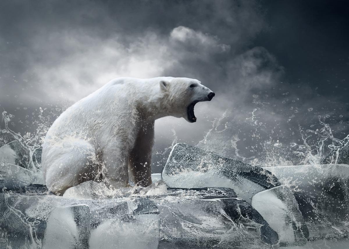 Ett av djuren som påverkas mest av klimatförändringarna