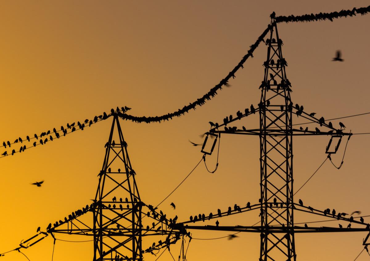 Pájaros en un tendido eléctrico.