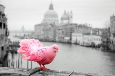 Contaminación acústica: el enemigo de los pájaros