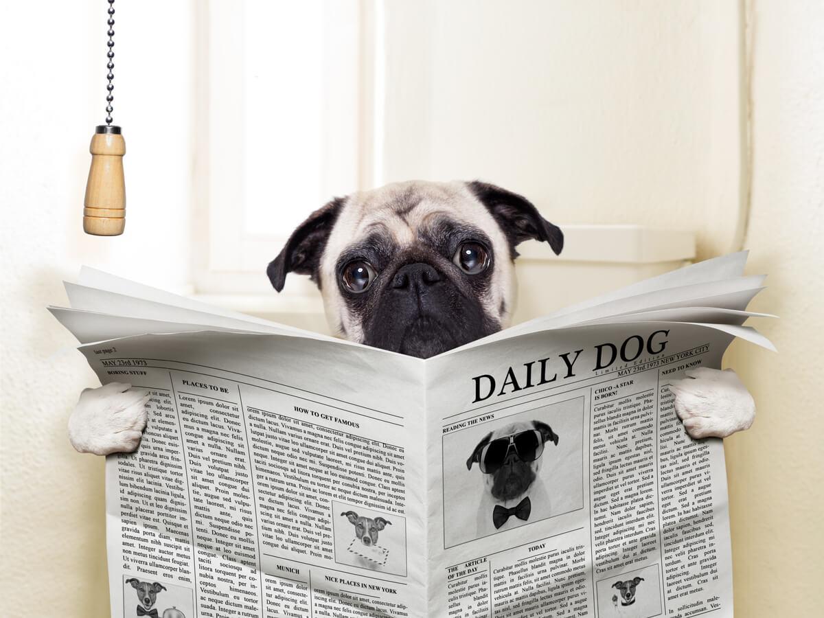 Un perro en un baño que lee el periódico.