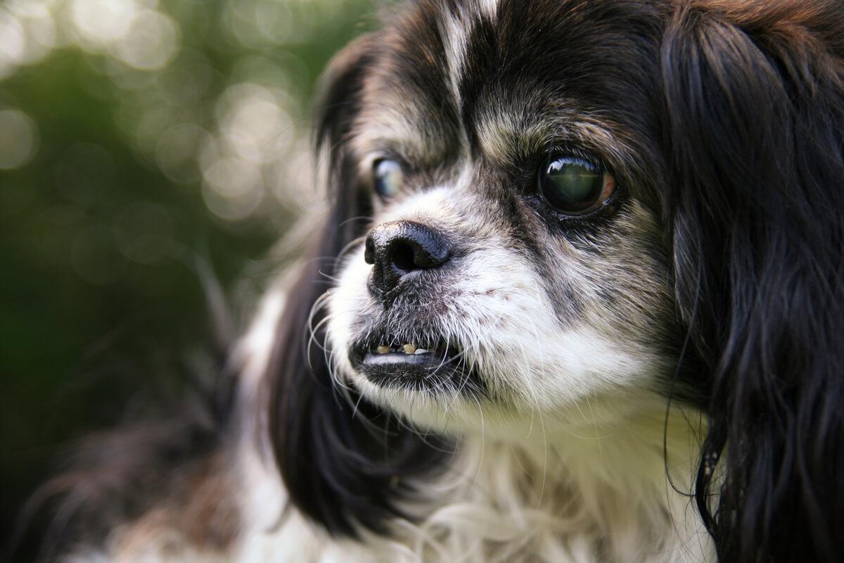 Un perro ciego en el parque.