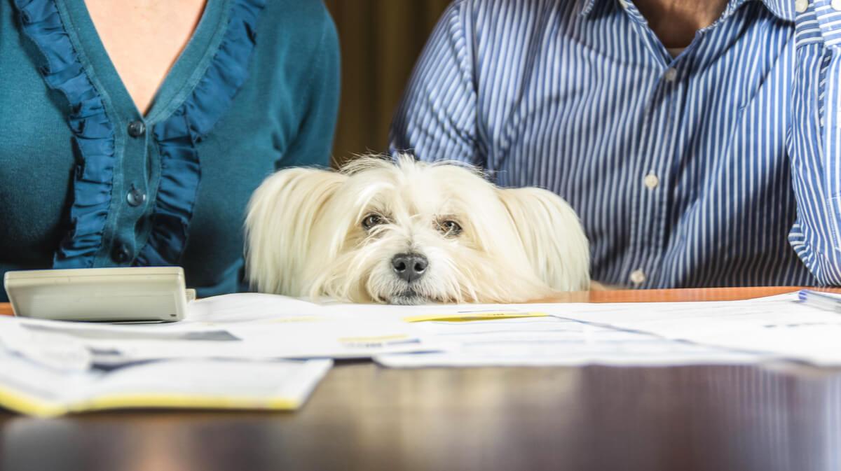 Los perros perciben el estrés de sus tutores.