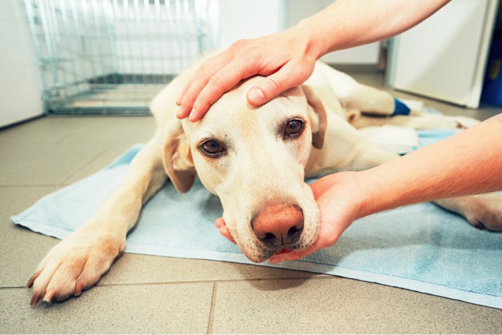 Cáncer en mascotas: estadísticas y consideraciones
