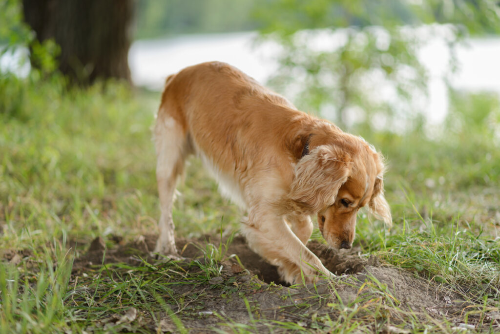 ¿Por qué entierran los perros su comida?