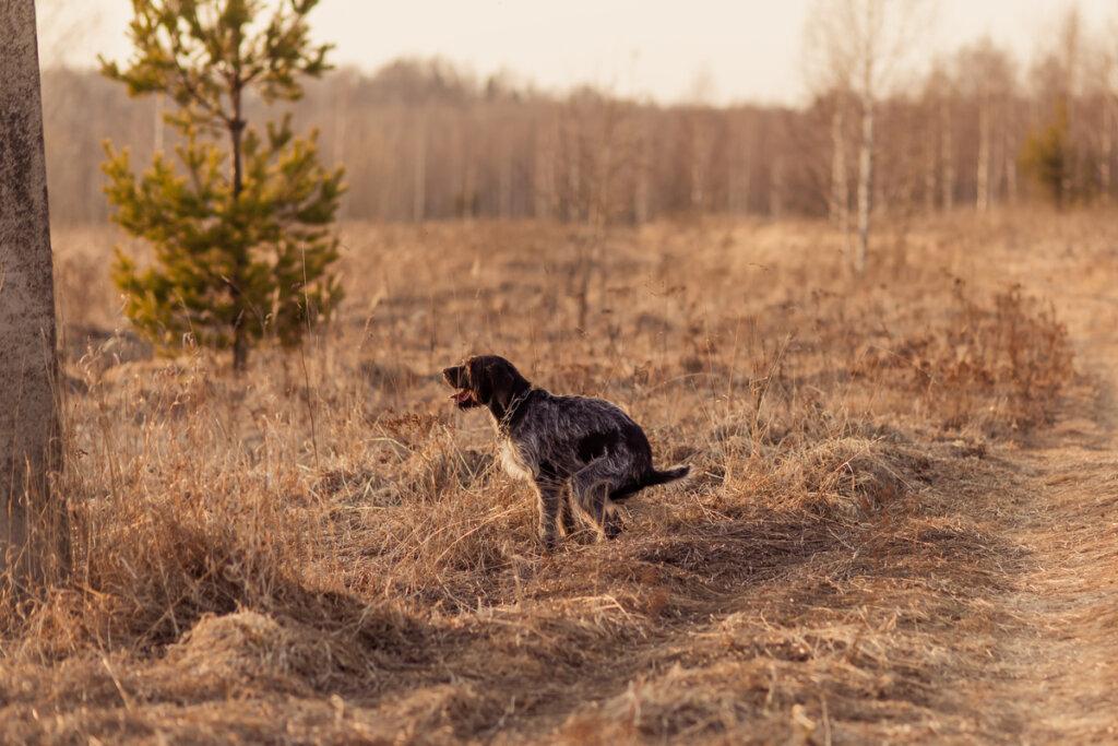 ¿Cuáles son los síntomas de estreñimiento en perros?