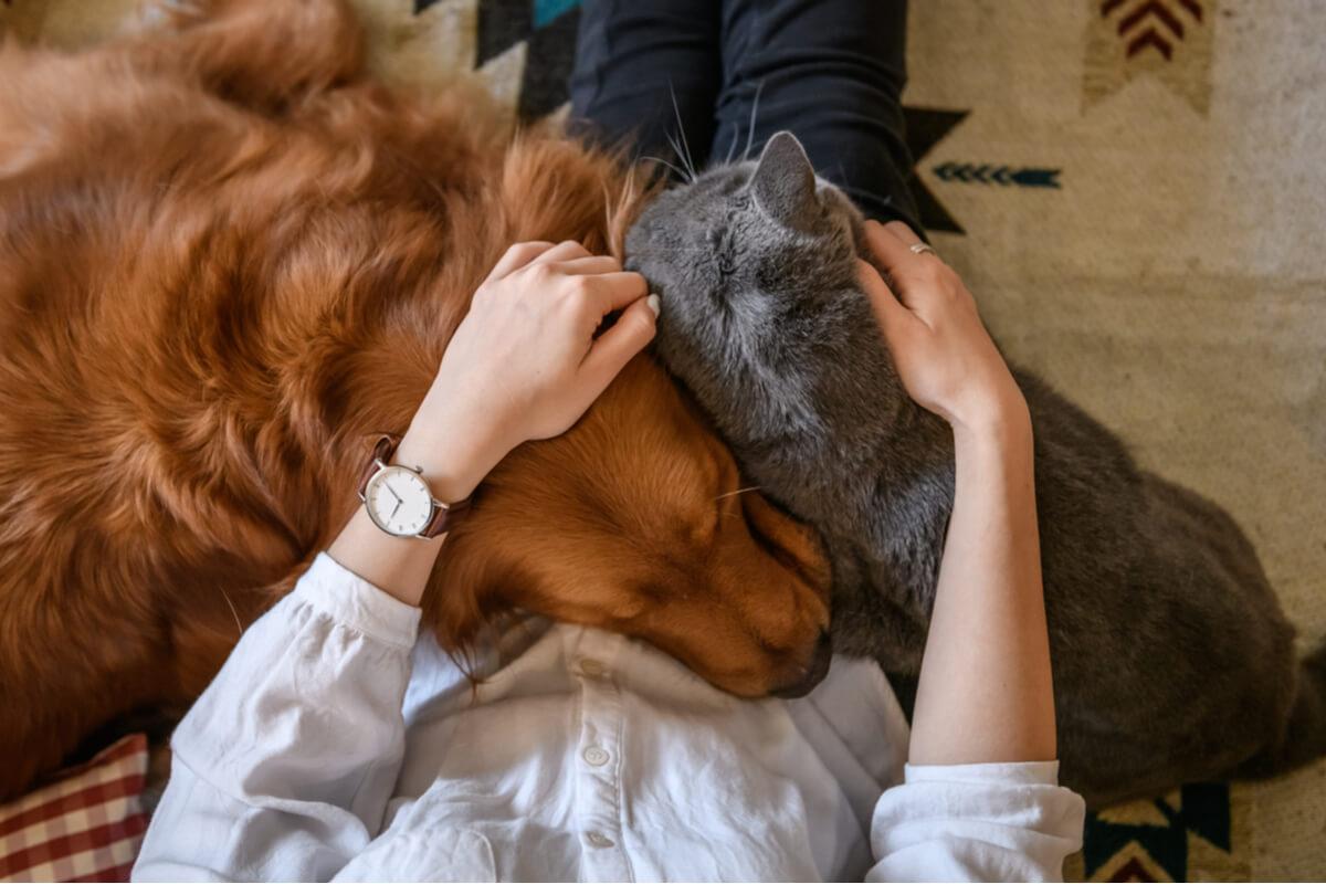 Un perro y un gato se abrazan.