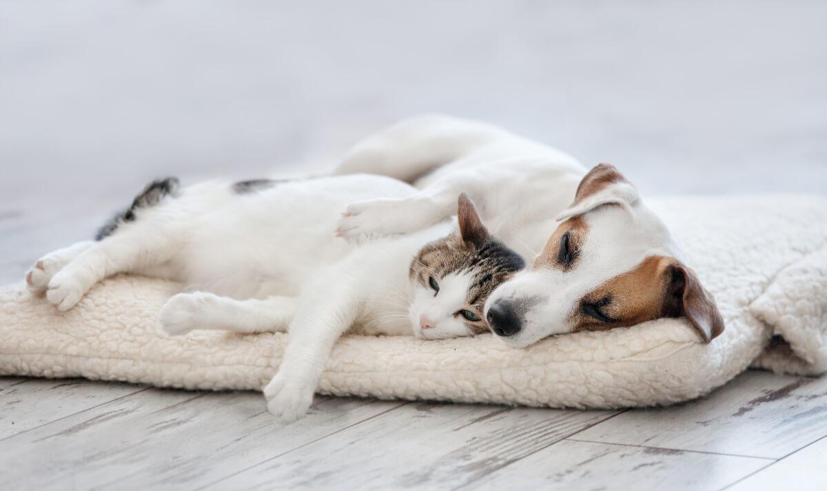 Un perro y un gato tumbados.