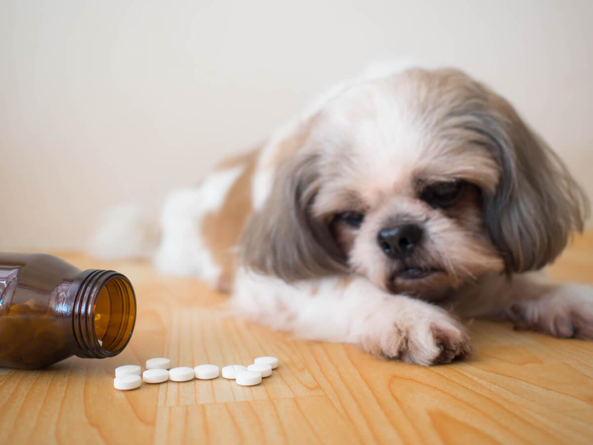 Existen muchos tipos de laxantes para perros.