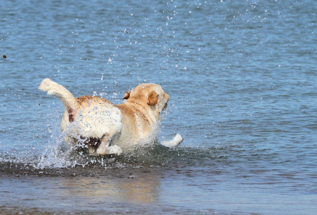Salvamento marítimo rescata a un perro en el mar