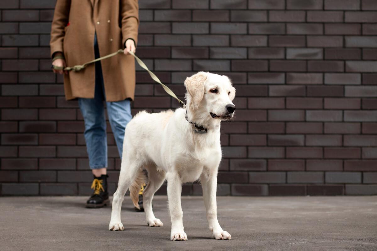 Gronder est l'une des choses que vous ne devriez pas faire à votre chien.
