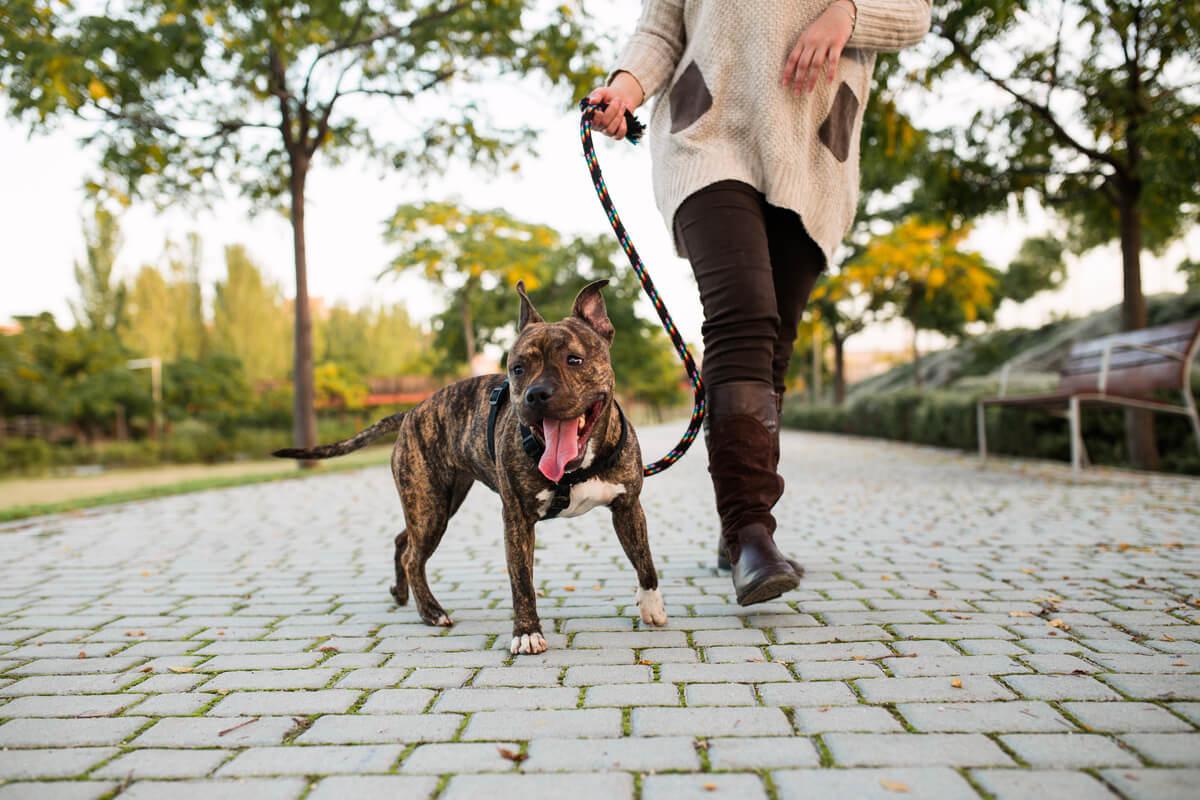 Un perro siendo paseado.