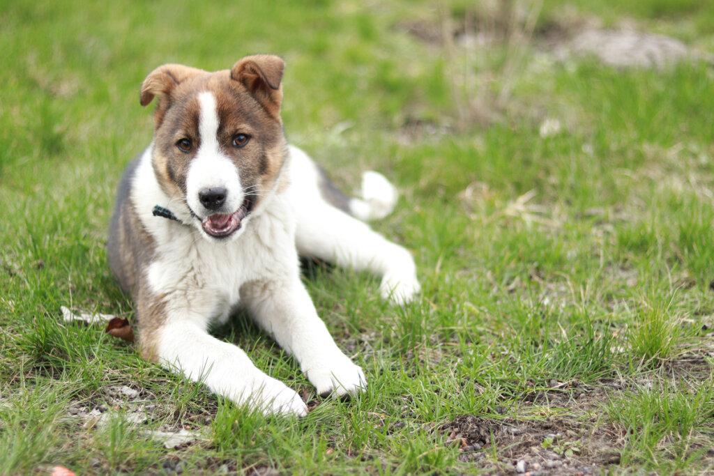 ¿Cuáles son las causas de la ataxia en perros?