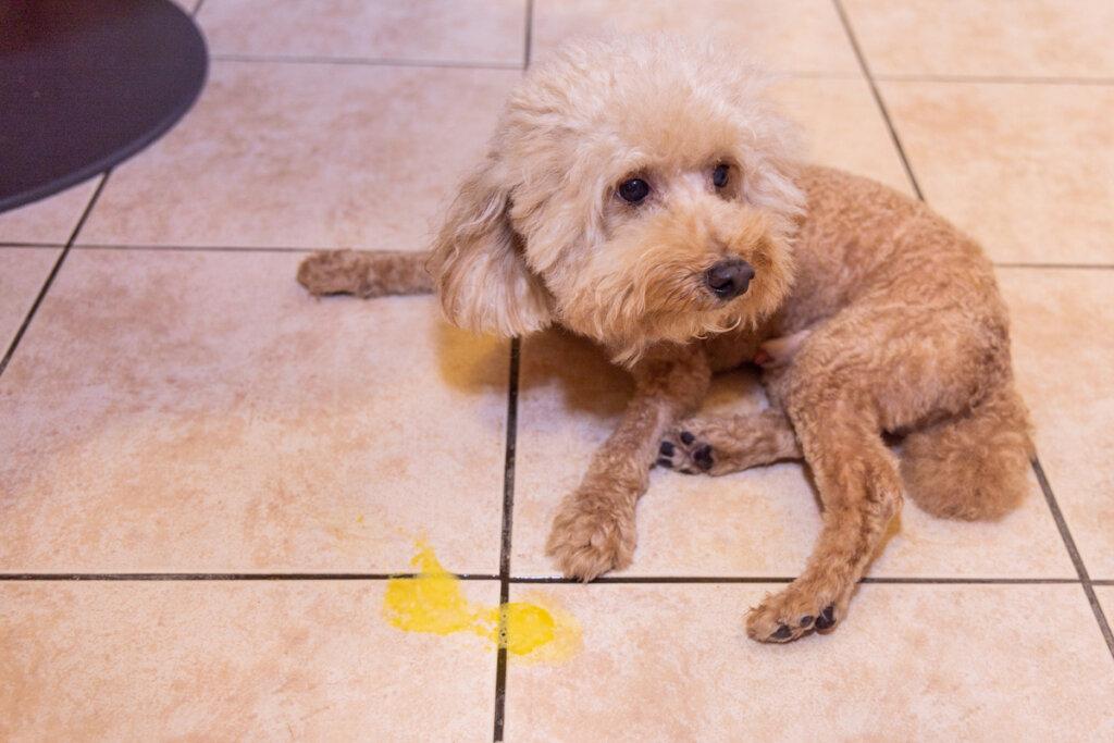 Tres enfermedades del páncreas habituales en las mascotas