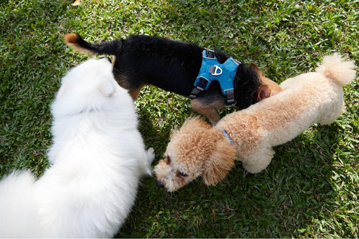 Perros oliéndose en el parque.