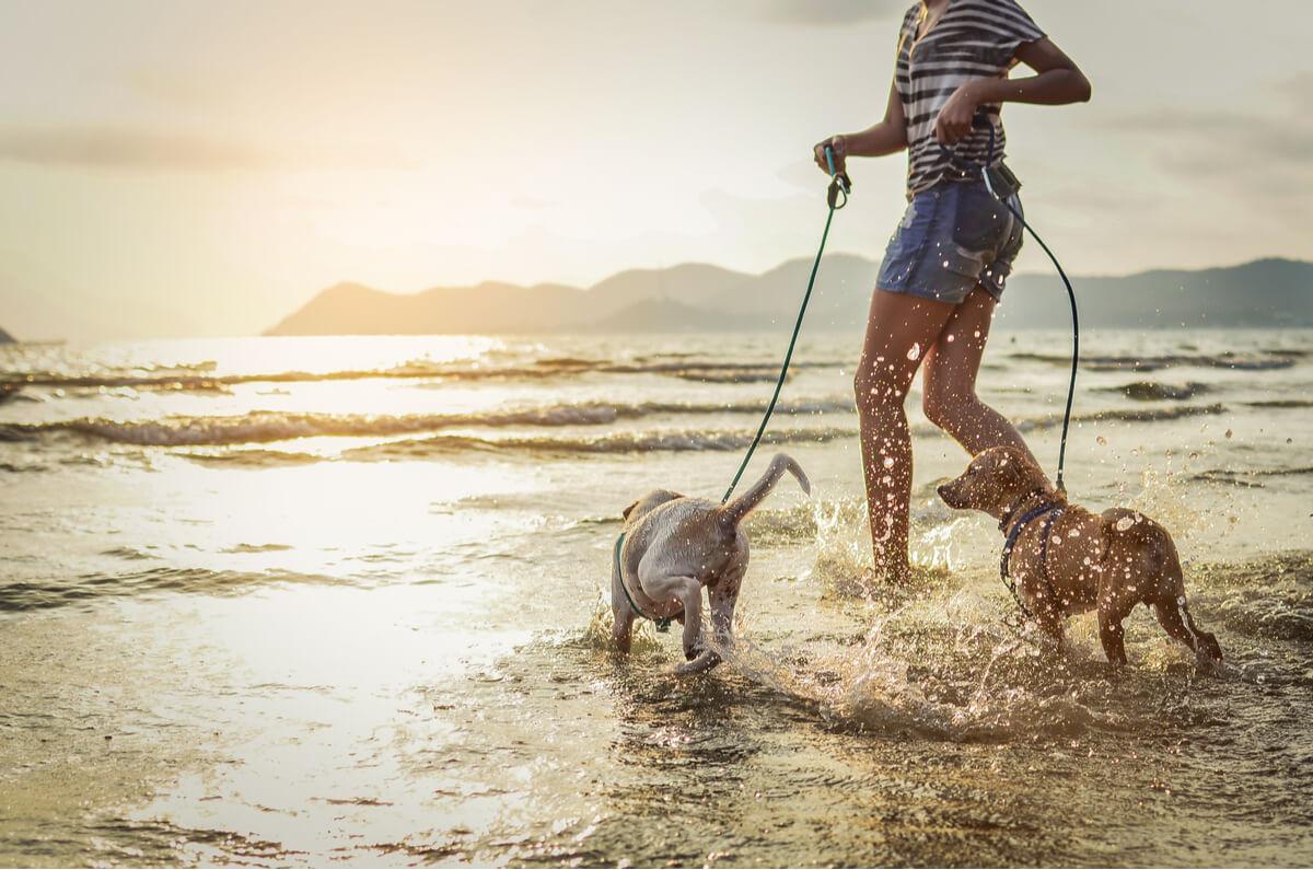 Salvamento marítimo rescata a un perro en el mar.