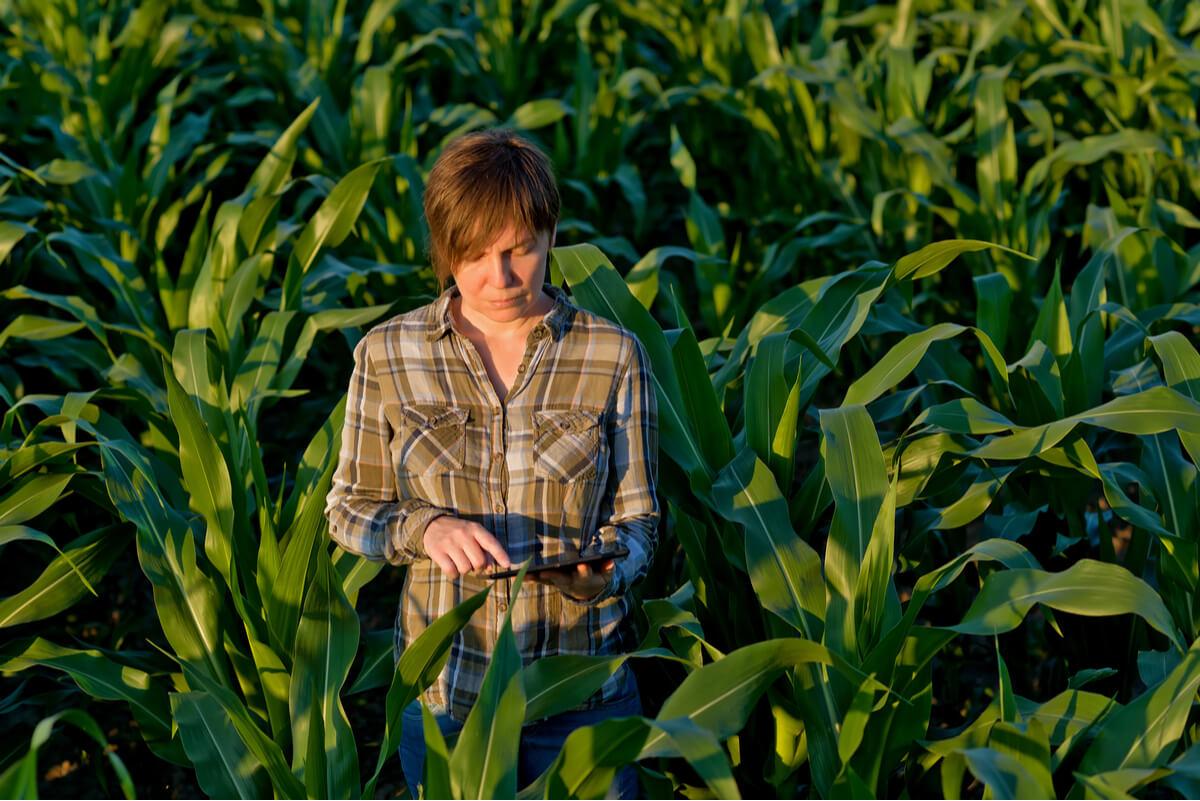 Una persona haciendo cálculos en un cultivo.