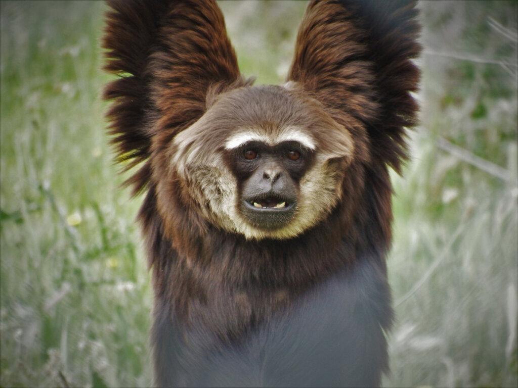El Centro de Rescate de Primates Rainfer