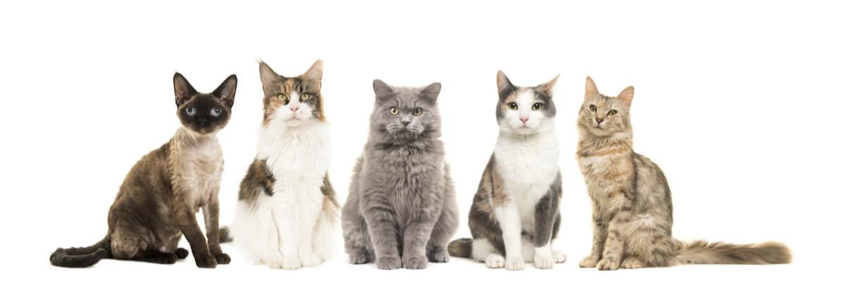 Cinco gatos diferentes.
