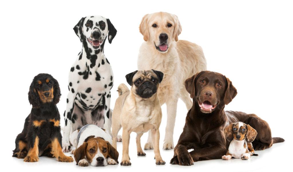 ¿Cuántas razas de perros existen?