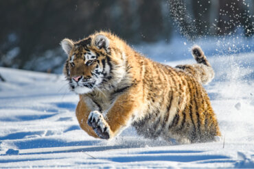 ¿Qué es una especie en peligro crítico de extinción?
