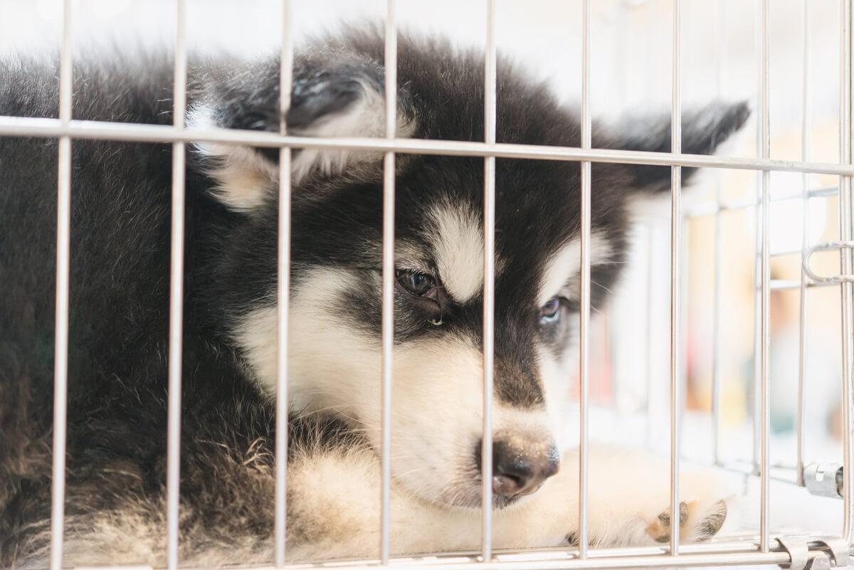 Banda criminal que vendía perros.