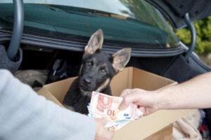 Desarticulada una banda criminal que vendía perros en internet