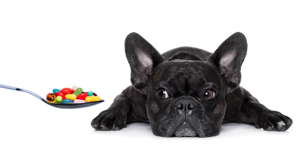 ¿Qué vitaminas son esenciales en los perros?