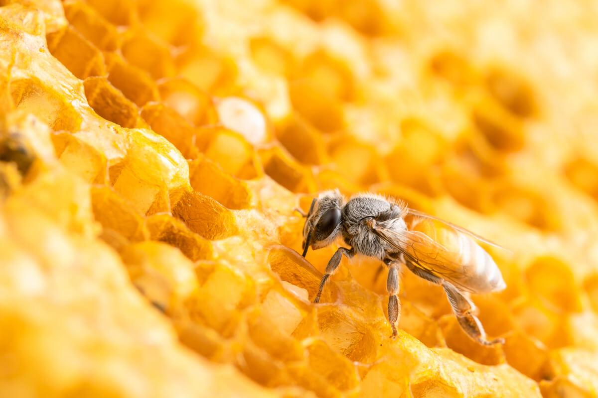 Una abeja en su colmena.