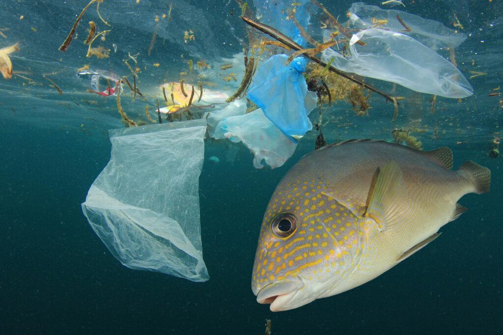 ¿Cómo afecta la contaminación hídrica a los peces?