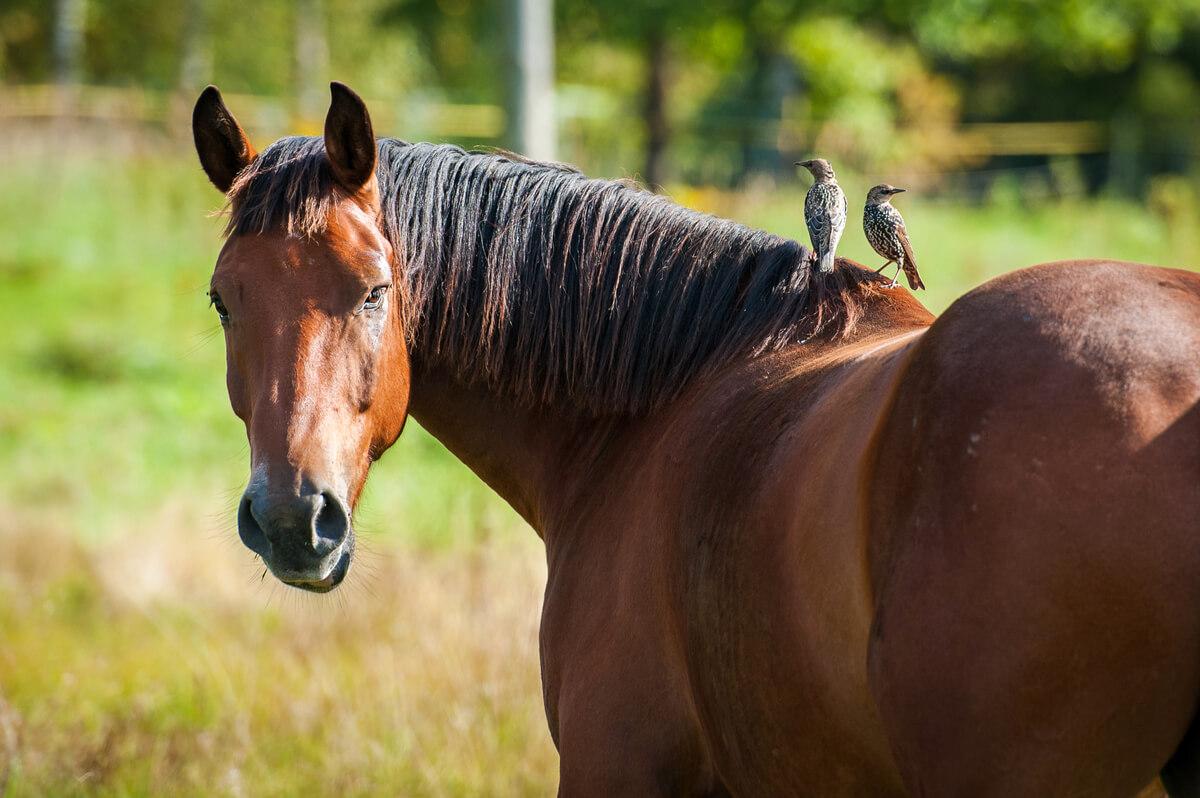Un caballo mirando a cámara.