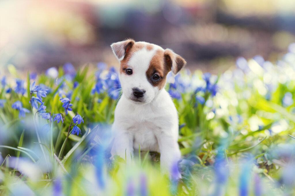 ¿Qué es el imprinting canino?