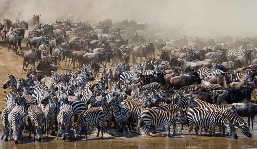 ¿Cuáles son los animales que migran?