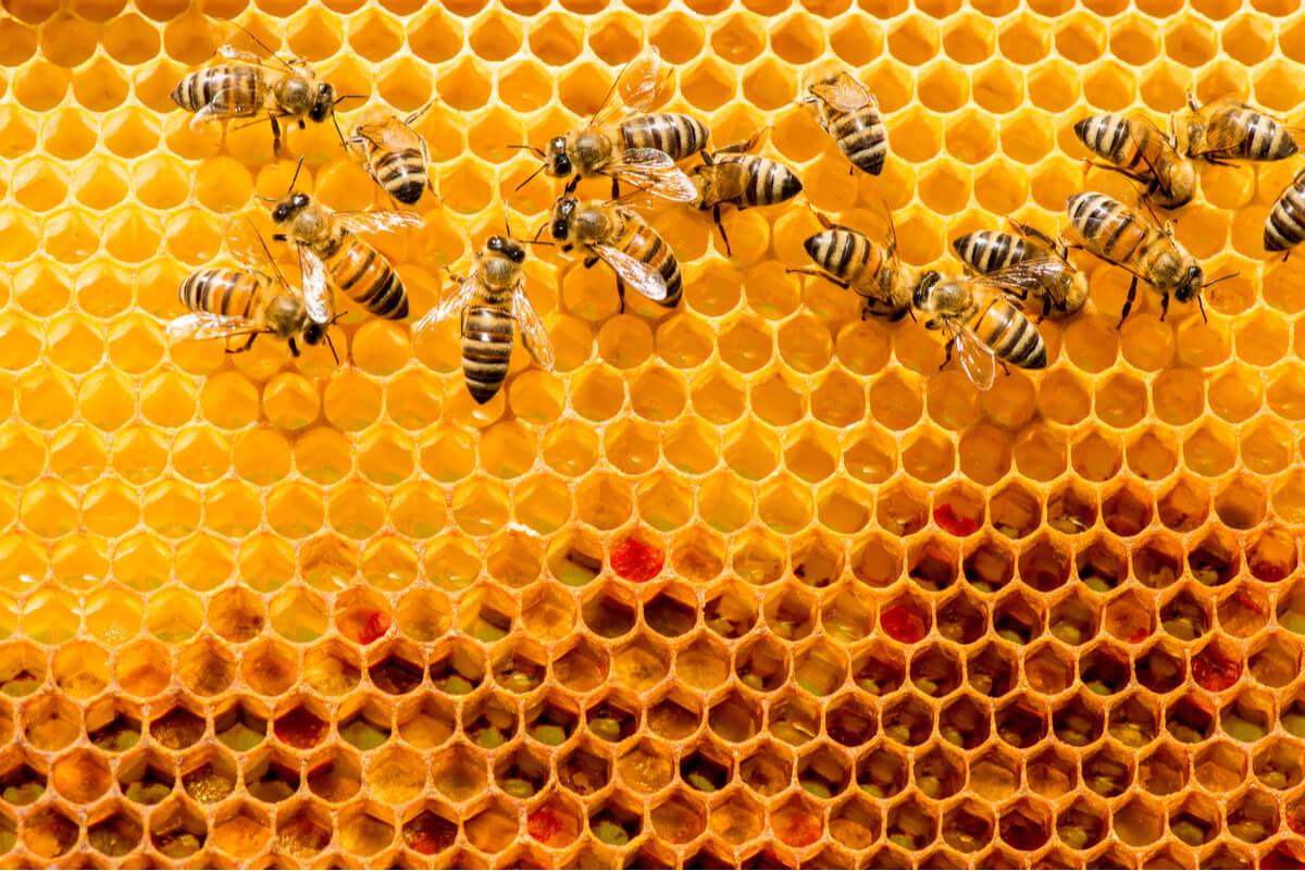 Colmenas de abejas grandes.