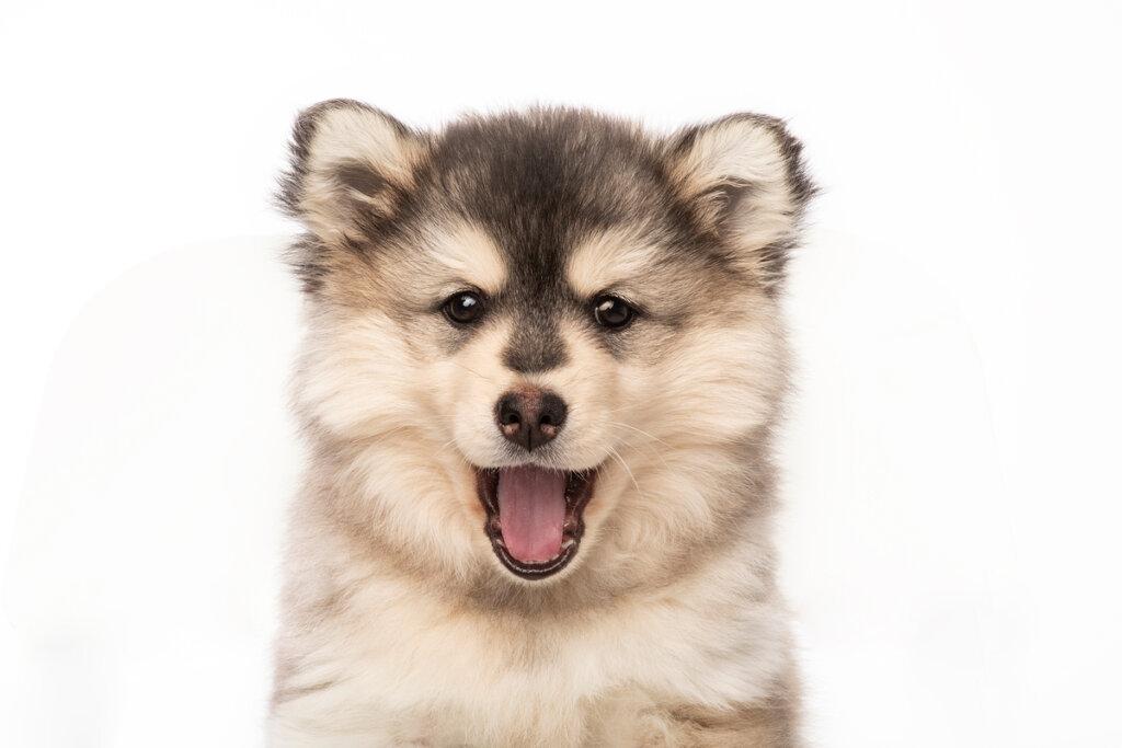 ¿Cómo cuidar la salud mental en los perros?