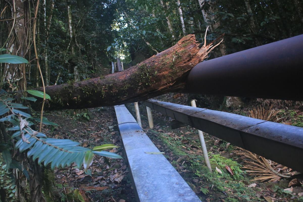Deforestación en la jungla.