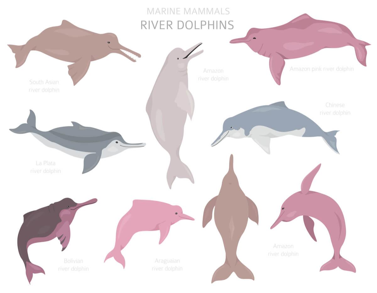muchos delfines son mamíferos en peligro de extinción.
