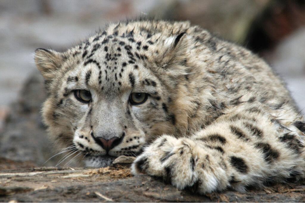 ¿En qué consisten las extinciones masivas?