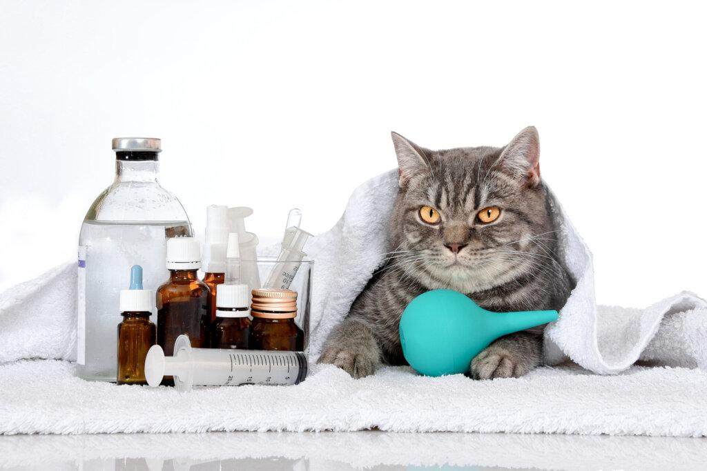 Las 6 enfermedades hereditarias en gatos