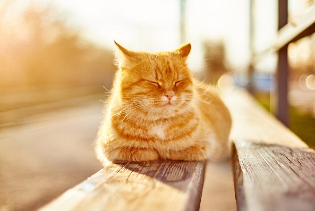 ¿Cuáles son los beneficios del sol en las mascotas?