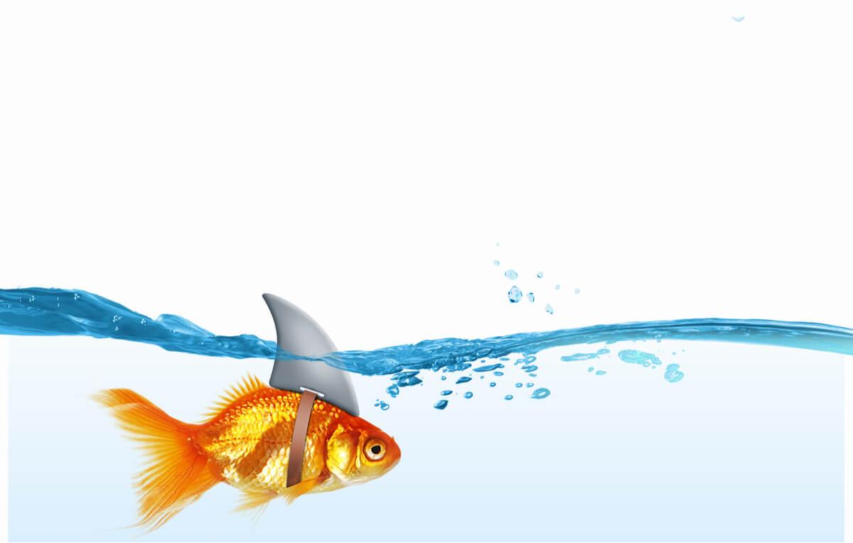 Un pez siendo engañoso.