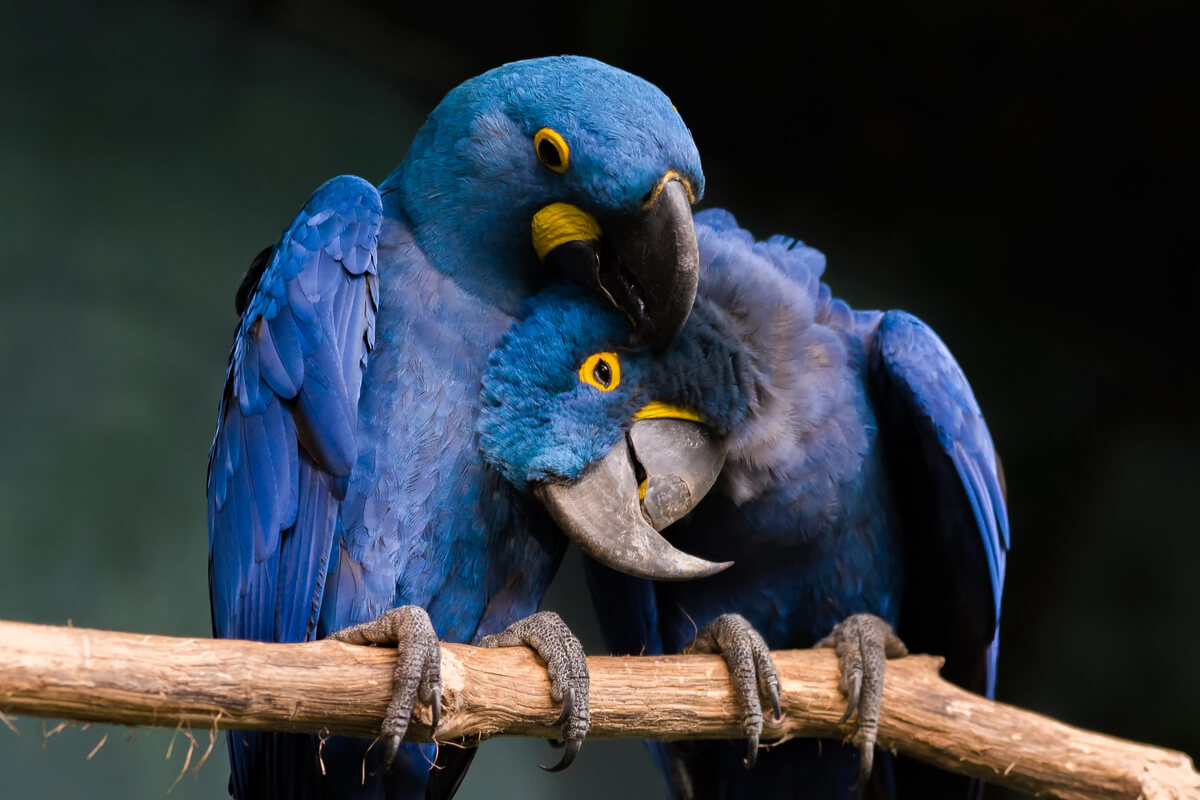 Las aves más parlanchinas del reino animal.