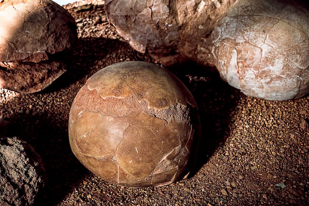 Huevos de dinosaurio fosilizados.