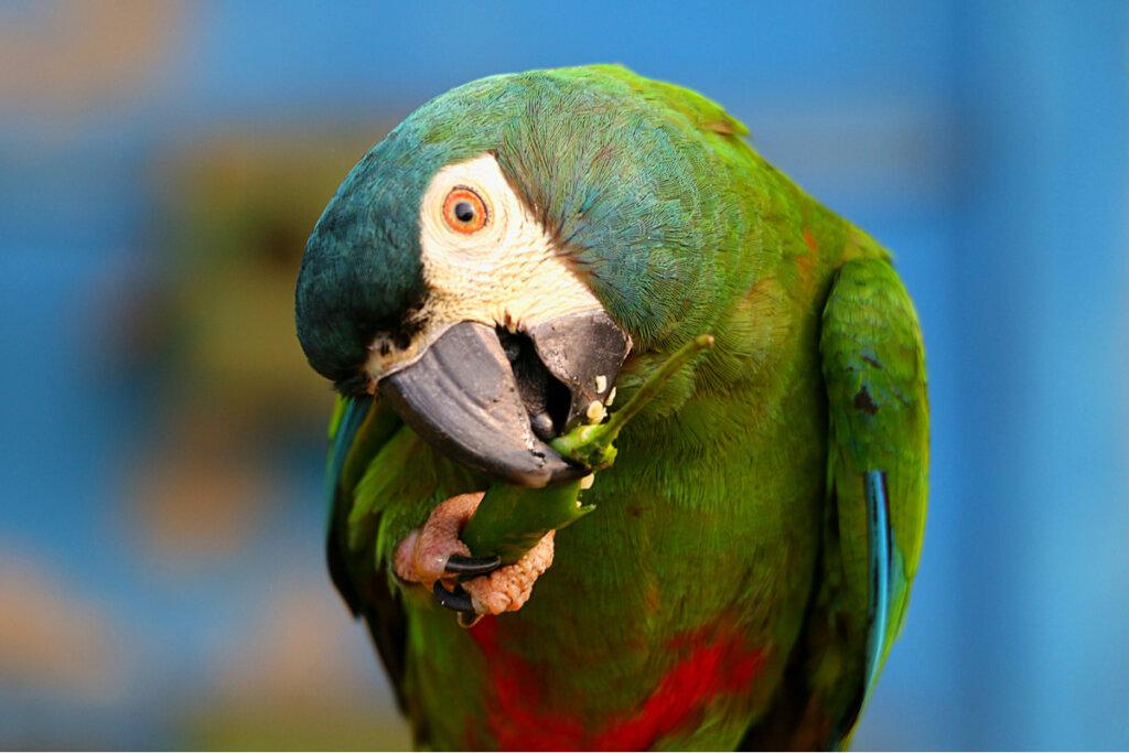 Las aves más parlanchinas del reino animal