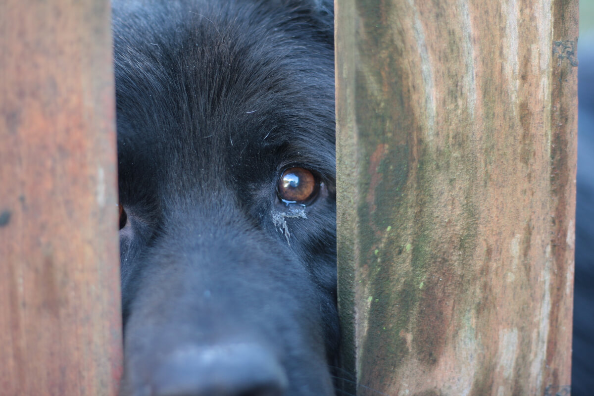 Realizar una denuncia por maltrato animal es esencial.