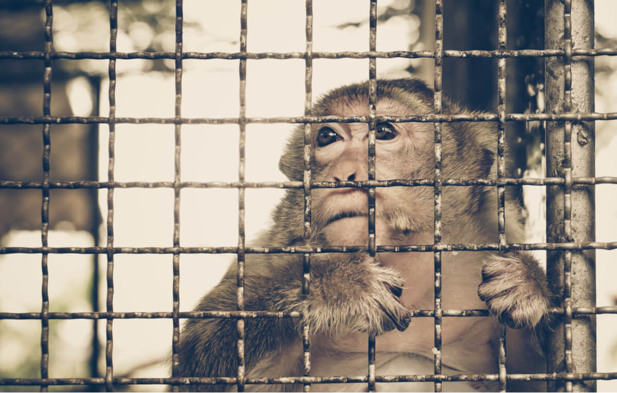 Comercio ilegal de animales.