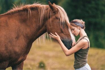 7 razas de caballos consideradas como las más hermosas