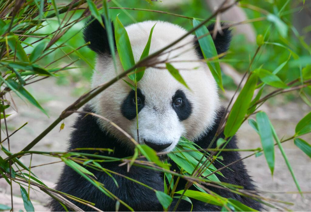¿Cuántas especies protegidas hay en el mundo?